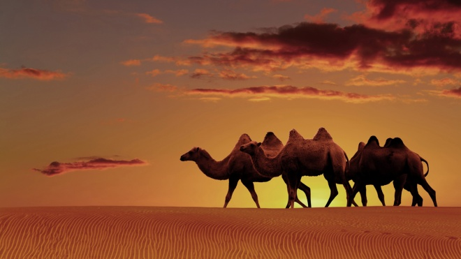 Camels-in-The-Sunset