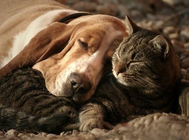dog_cat1